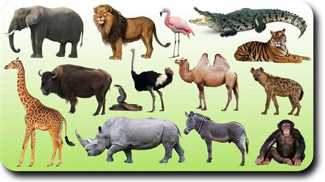 let s learn about jungle animals letã s learn about animals books animals creative
