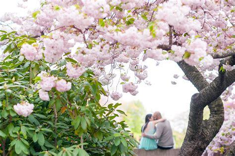 Brooklyn Botanic Garden Engagement Photos Cherry Cherry Blossom Botanical Garden
