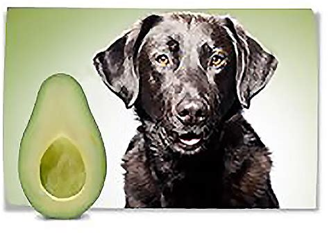 avocado safe for dogs avocados and dogs pink cake plate