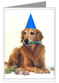 golden retriever birthday card golden retriever gifts greeting cards notecards