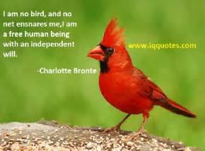 bird quotes quotesgram
