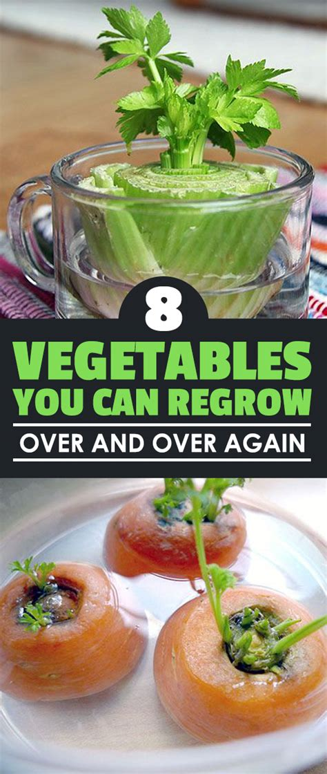 8 vegetables you can regrow 8 vegetables you can regrow and again