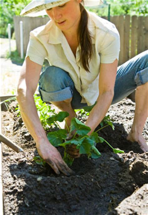 vegetable garden tips and tricks craftionary