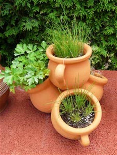 fines herbes pour l hiver