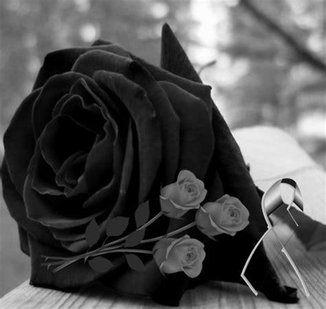imagenes rosas blancas de luto im 225 genes de rosas negras para whatsapp con frases de luto