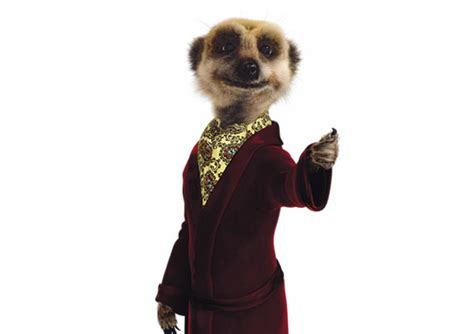 compare the meerkat house insurance comparethemarket car insurance redesign carwow