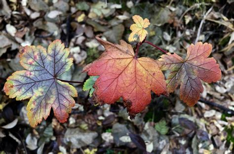 what makes leaves change color why do leaves change colors in the fall vics tree service
