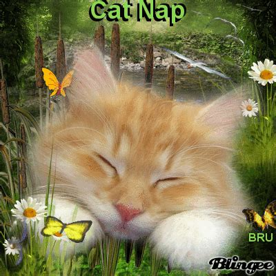 cat nap wallpaper cat nap by beu blingees r us picture 129526415