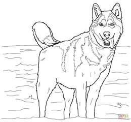 coloring pages of husky dogs siberian husky coloring page free printable coloring pages