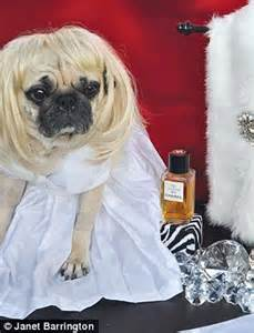marilyn pug doe eyed dogs in fancy dress are of new photography book daily mail