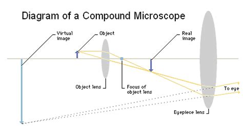 microscope basics get started with microscopes!