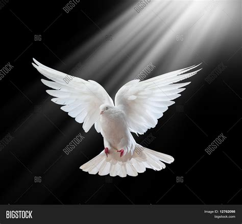 imagenes sanidad libres a free flying white dove isolated on a black background
