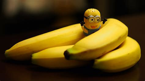 can my eat bananas can we eat banana during pregnancy periods weight loss me health