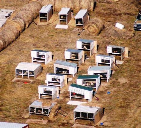 puppy mills in iowa cisr what is a puppy mill