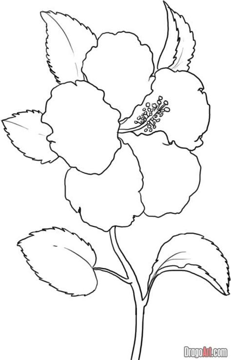 Yellow Hibiscus Coloring Page | step 5 how to draw a yellow hibiscus