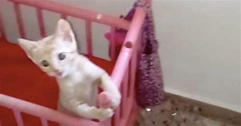 Cat Net For Baby Crib Tiny Kitten Sees Warming Bottle Then Runs To Crib To Wait For It Familypet