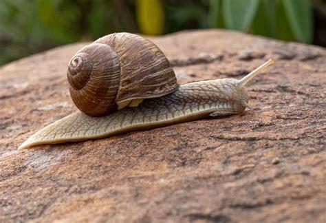 snails eat portland preserve