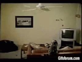 cat swinging on fan ceiling fan gifs find share on giphy
