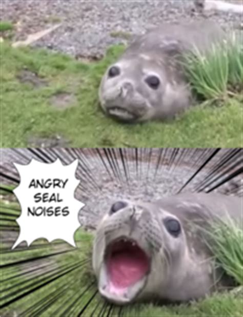 angry noises angry botan noises angry noises your meme
