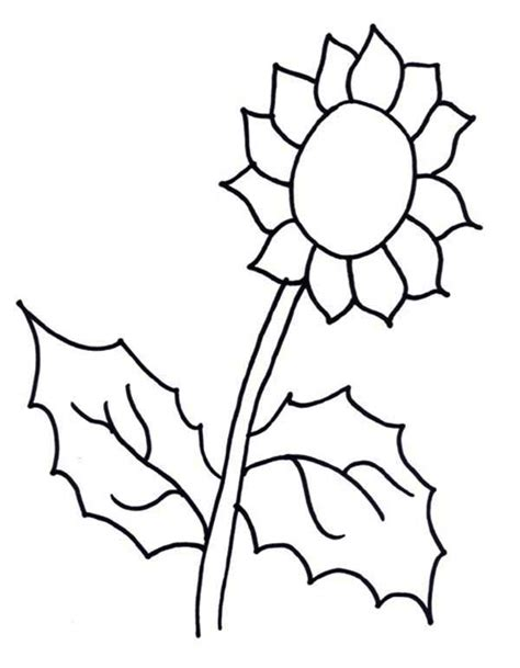 sunflower coloring page  print  coloring