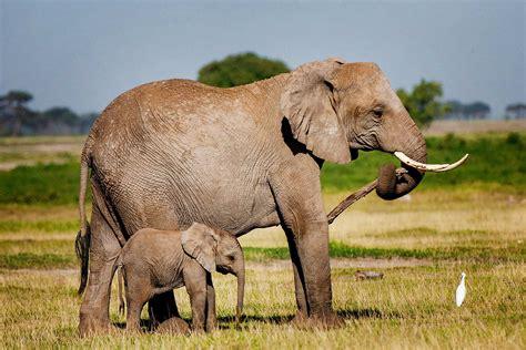 amboseli national park travel tips adventure travel
