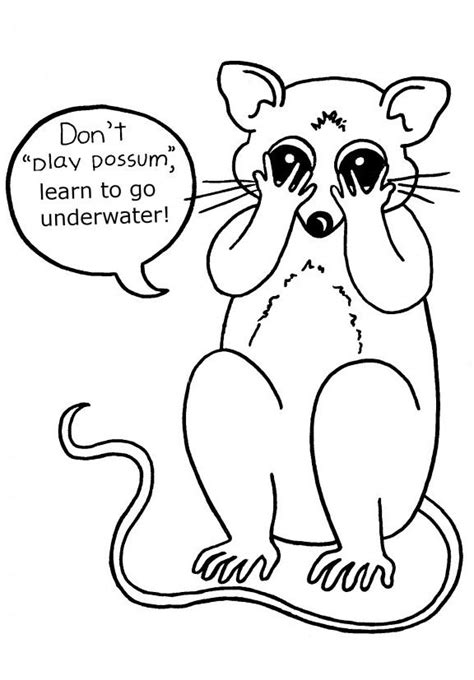 top  possum opossum coloring pages   kids