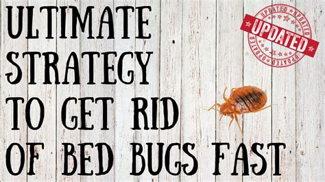 rid  bed bugs  quick tips  killing bed bugs naturally youtube