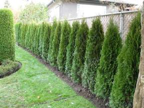 Privacy Fence Ideas For Backyard » Home Design