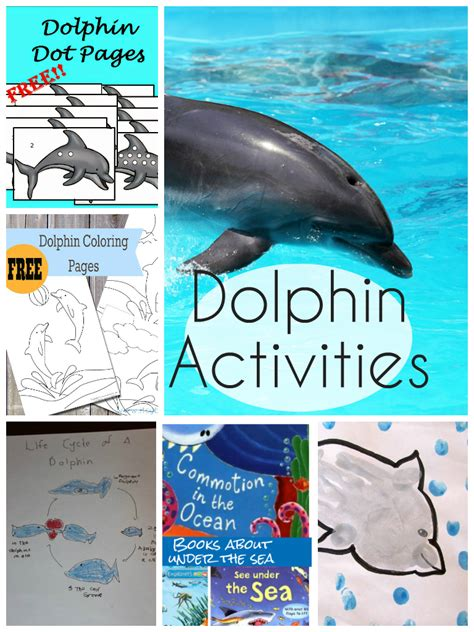 dolphins a kid s book of cool images and amazing facts about dolphins nature books for children series volume 5 books dolphin activities for in the playroom
