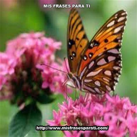 imagenes mariposas tristes polvillo de mariposa mis frases para ti