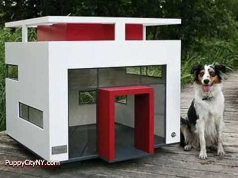 extravagant dog houses for pets only doovi