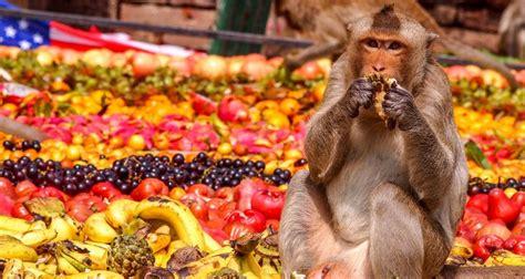 thailand festival    monkeys feasting