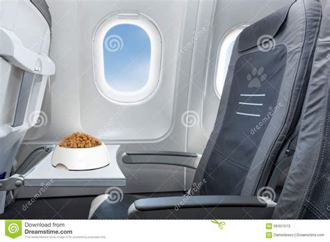 window seat instrumental pet welcome on board stock photo image 56451513