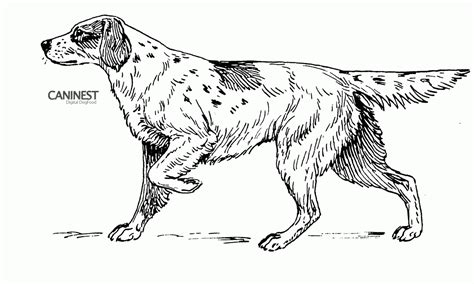 great sheets great dane dog coloring pages az coloring pages
