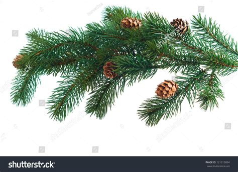 pine cones pine branches cone christmas stock photo