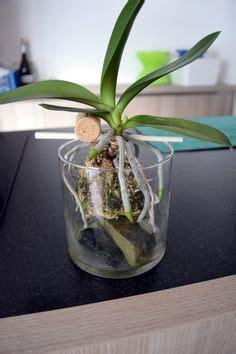 hydrotonhydroponics images hydroponics