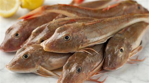 come cucinare il capone ricetta pesce capone olive e pomodori giornale cibo