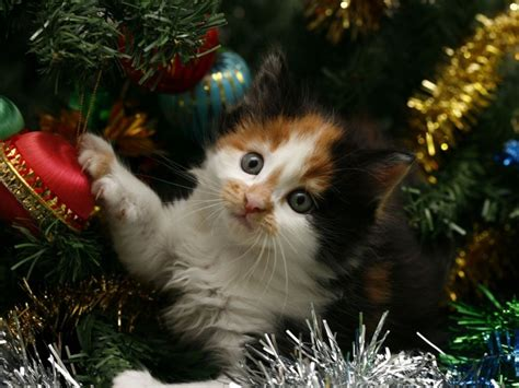cat resistant wallpaper 10 tips to cat proof your christmas tree dog cat and