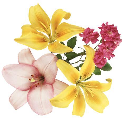 imagenes flores grandes 174 gifs y fondos paz enla tormenta 174 im 193 genes de flores