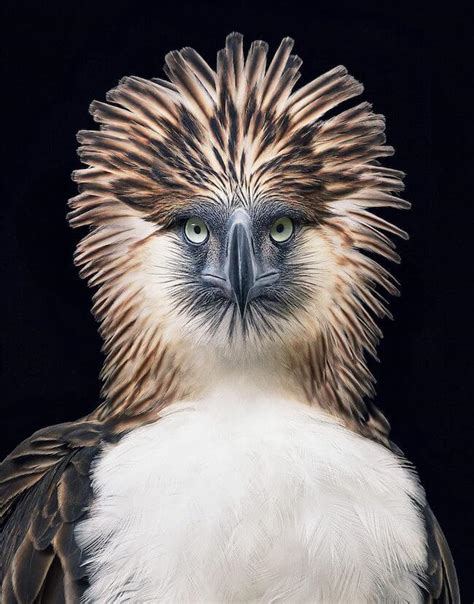 tim flach endangered animal photography collection    stunning  emotional