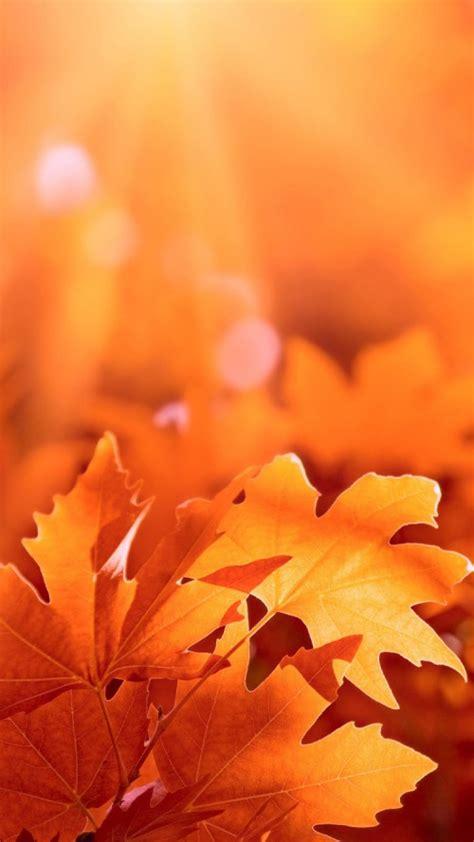 iphone  autumn wallpaper wallpapersafari