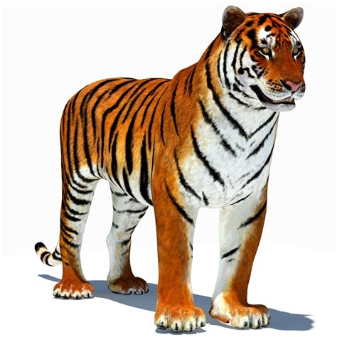 tiger tiger essential modern tiger animation images clipart best