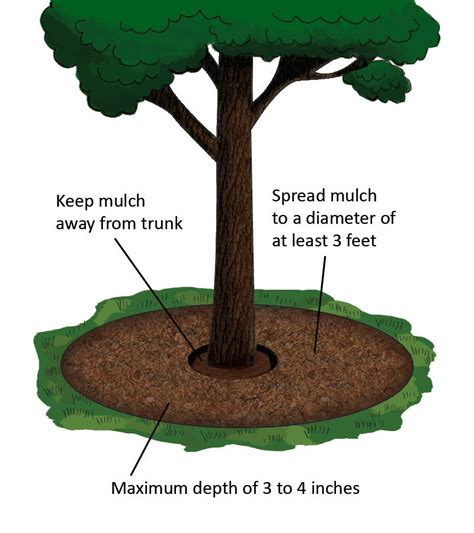 is mulch helping or hurting your garden tennessee gardener