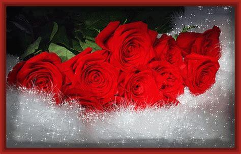 imagenes con movimiento de rosas rojas las mejores fotos de rosas hermosas rojas imagenes de rosa
