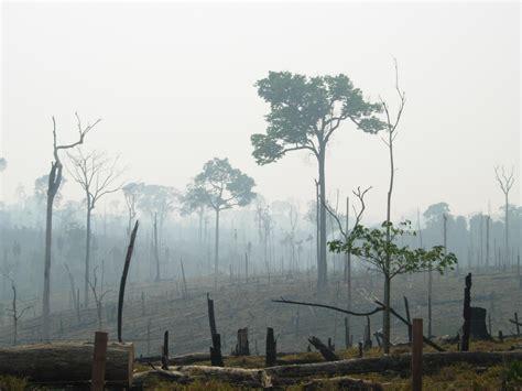 imagenes de hábitats naturales pierde m 233 xico 15 461 millones por degradaci 243 n y