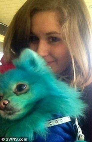 pomeranian hair dye bournemouth pomeranian s fur extensions and hair dye cost 163 800 a month daily mail