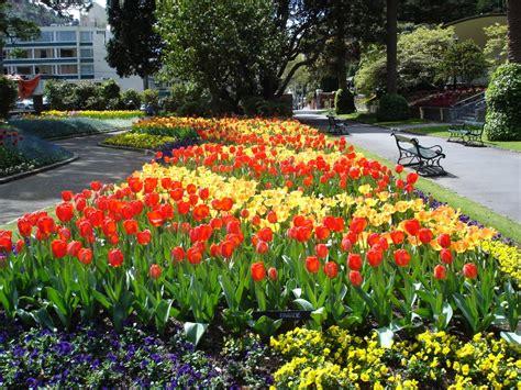 Wellington Botanical Gardens Panoramio Photo Of Tulips In The Botanical Gardens Wellington