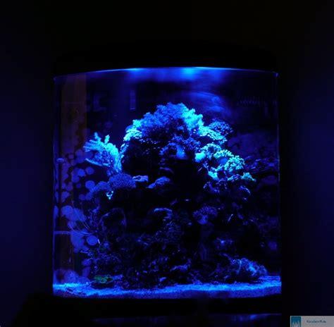 Led Aquarium Beleuchtung Erfahrung Best 28 Images Led