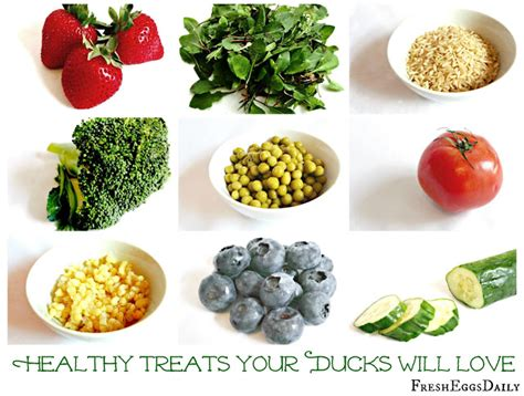 healthy treats for backyard ducks fresh eggs daily 174