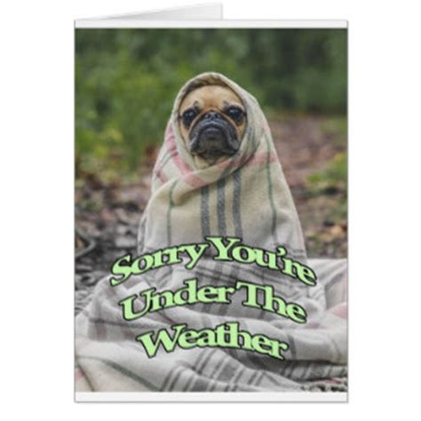 get well soon pug get well soon pug greeting cards zazzle